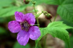 pink flower 176