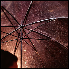 Rain (Lefty Jor) Tags: street light hk 120 6x6 film wet rain night umbrella t hongkong fuji dof bokeh hasselblad transparent planar 500cm carlzeiss proxar 80mmf28 pro800z