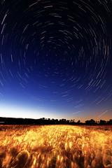 [フリー画像] 自然・風景, 空, 夜空, 田畑・農場, 小麦・コムギ, 201007181900