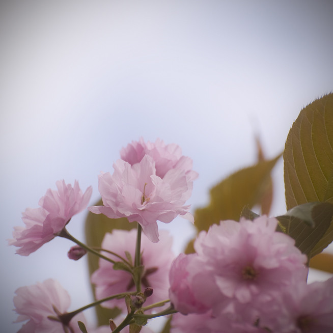 FotobloggenDSC_0451