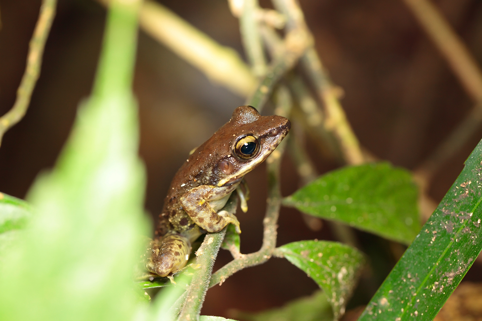 四崁水蛙蛙團