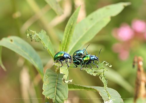 3 réflex y 1 compacta: macro de insetos