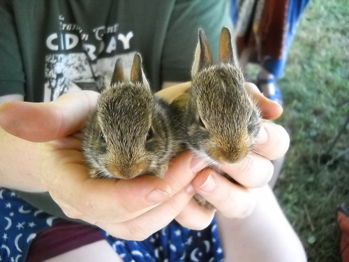 baby bunnies!