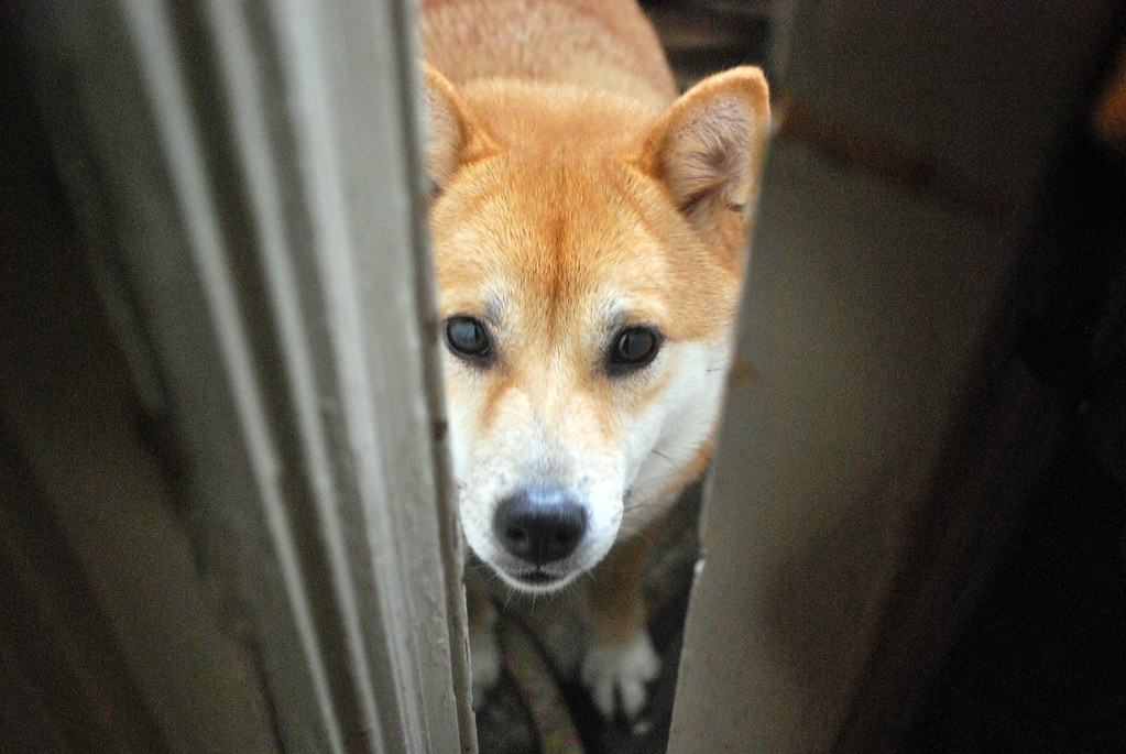 Akemi at the Door