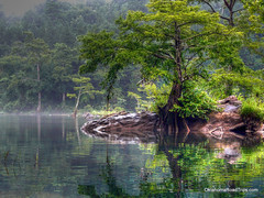 LMF Cypress Tree (FreeWine) Tags: vacation reflection tree oklahoma nature water rock river explore cypress paddling brokenbow floattrip naturesfinest lmf tonemapping lowermountainforkriver earthnaturelife