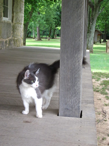 Cat at Bollinger mill