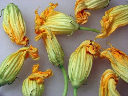 finally, squash blossoms