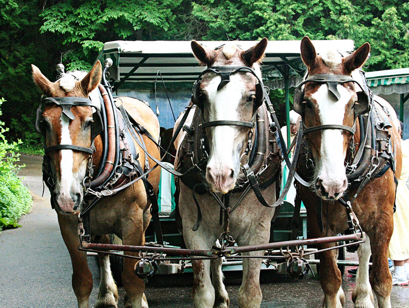 Mackinac Island - Carriage Tour