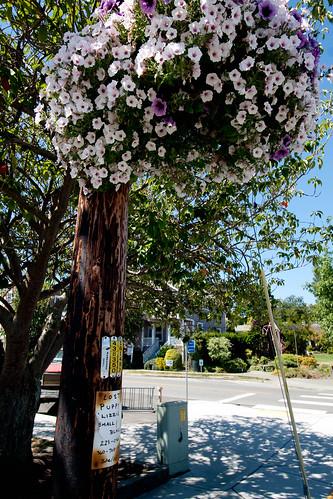 Street side flowers