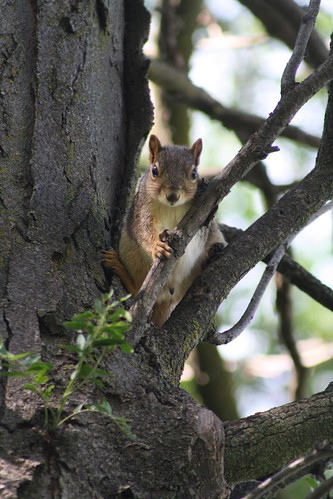 Squirrelin' Around in Bussell Park