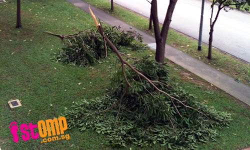 Fallen branches in Woodlands due to heavy rains in past week