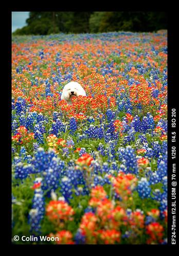 Wild Flower & Dog