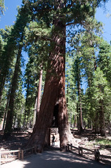 California Tree Photo