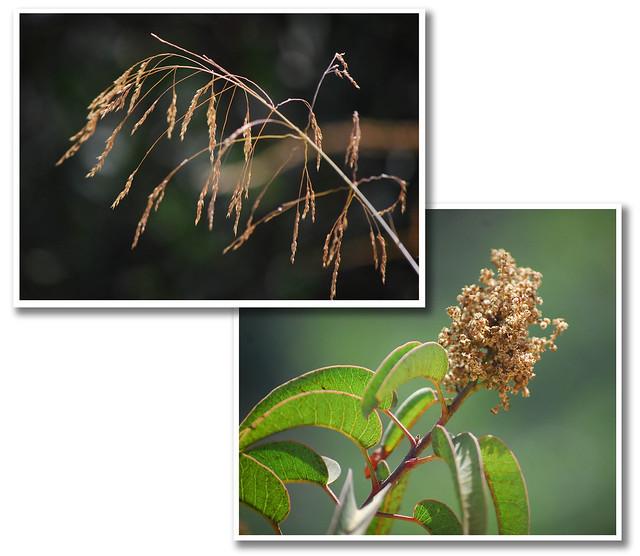 Plants closeup