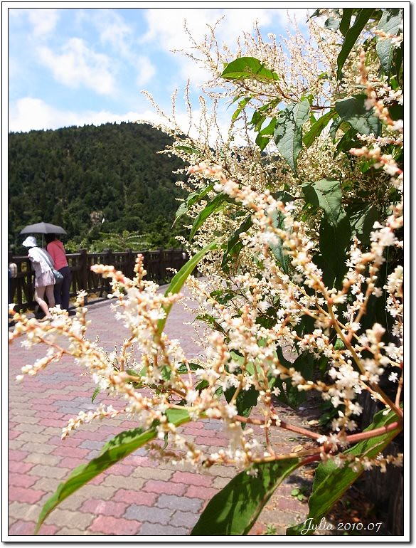 太平山 (16)
