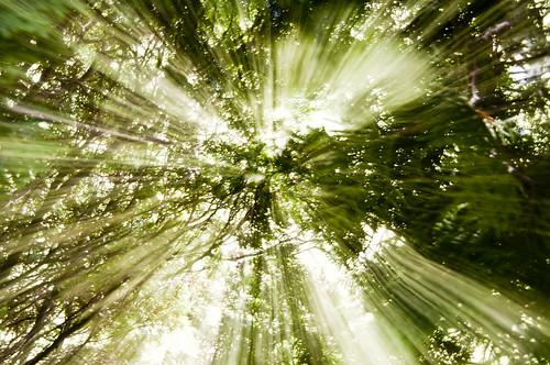 [フリー画像] 自然・風景, 森林, 樹木, 日光・太陽光線, グリーン, 201008081900