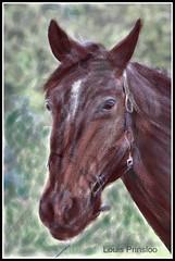 Horse of mixed media