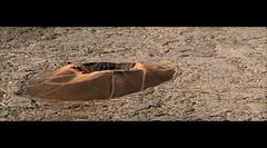 Crter parasitario en la base del volcan de Reunin. (Vvillamon) Tags: france reunion de landscape island volcano la leo cone sony paisaje 350 crater piton alpha francia isla runion formica reunin volcan le parasitic cono fournaise crter cne a350 strombolian strombolien vvillamon estromboliano parasitario