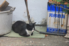 IMG_0520 (翔志) Tags: taiwan taipei 台灣 台北 貓 taipeicounty 台北縣 侯硐 houtong 猴硐 瑞芳鎮 貓村 catvillage rueifangtownship houtongcatstreet 百貓街