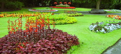Carpet Bedding (Fiona Moate) Tags: stamfordpark municipalgardens formalbedding