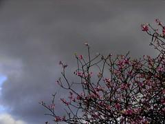 paz & fúria (Sociotao) Tags: sky cloud storm flower tree fleur rain lluvia heaven peace flood flor chuva pluie paz céu ciel relationship cielo árbol tormenta nuage nuvem arbre árvore nube fury orage temporal paix tempête tempestade fúria relación dilúvio relation inondations inundación relacionamento fureur