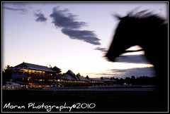 Heaven on Earth (EASY GOER) Tags: vacation horses horse ny sports beauty animals racetrack digital canon fun athletics action saratoga competition upstate running racing entertainment runners athletes races equine competion thoroughbreds 2010 equines sportofkings nyra canonhorses