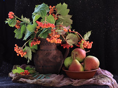 Guelder Rose Berries And Pears (panga_ua) Tags: red stilllife orange greenleaves black beauty glitter scarf canon ceramics berries dof pears bokeh plate ukraine fabric jug dslr arrangement folds tabletop naturemorte rivne naturamorta draping younglady bodegones viburnumopulus kalyna ukrainianembroidery familyroots colorphotoaward nataliepanga guelderroseberriesandpears guelderroseberries ukrainianfolklore