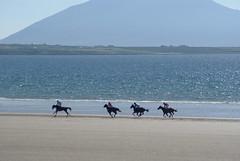 Horse racing on the strand (Frank Fullard) Tags: horse strand racing mayo achill doolough erris belmullet fullard geesala frankfullard
