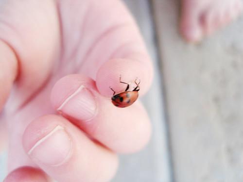 caught a ladybug