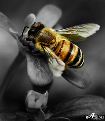 Good Morning.. (ZiZLoSs) Tags: white black macro canon eos bee 7d usm f28 aziz ef100mmf28macrousm abdulaziz  ef100mm zizloss  3aziz canoneos7d almanie abdulazizalmanie httpzizlosscom