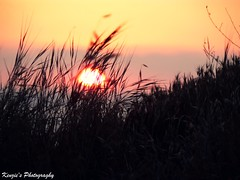 (Skooter11) Tags: sunset sky sun grass silhouette wind blowing kenzie deadgrass skooter11