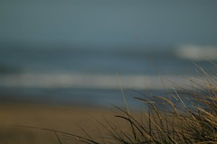 Day 220/365:  The Softness... (CMSi) Tags: ocean beach nature grass oregon sand waves pacificocean oregoncoast lincolncity beachgrass