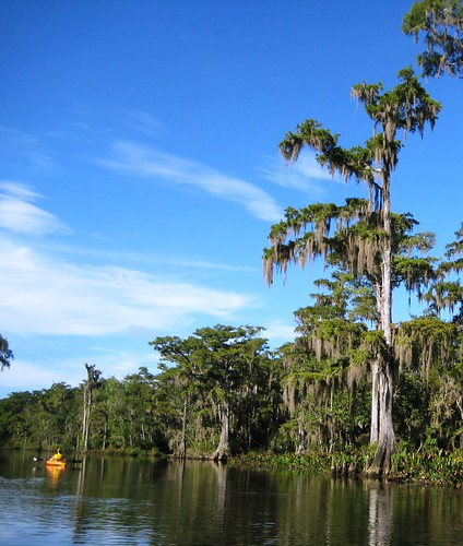 Wordless Wednesday: Paddling the Wakulla