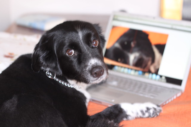 dog using a computer video chat