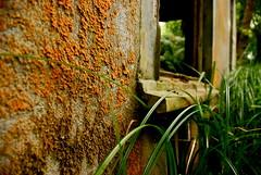 "Midlake - ""Bring Down"" (AzrimEkim) Tags: orange rot abandoned grass oregon forest moss decay"