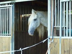 un petit air de Brigitte Bardot ? (marycesyl,) Tags: horse cheval jument brigittebardot