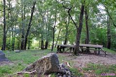 Pusiano 039 (adaman.it) Tags: tree forest table nikon picnic pusiano tavoli d90 nikond90 adamanit