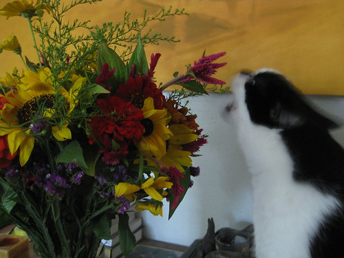 Flowers and Naughty Cat