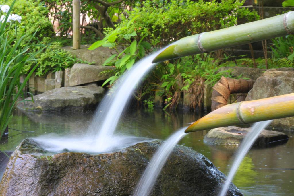 Hydrangeas - Exploring Hase, Kamakura part2 (9)