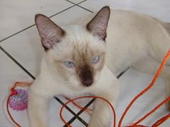 ตาหวาน - Blue Eyes