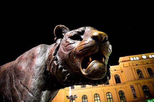 Tiger city