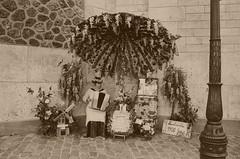 Montmartre 1900 (David A Córdova M) Tags: flowers music woman paris france flores film 35mm moulin photography photo mujer foto shot picture iglesia montmartre 1900 musica fotografia amateur couer acordeon sacré davidcordova deividcordova