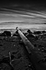 Beyond the wasteland (Addi Viggs) Tags: longexposure bw seascape seaweed blacksand iceland stones north gray pipe skagastrnd hnafli silverefex