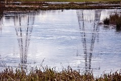 Reflections: Icy Pylons (David_Rees) Tags: england lake reflection ice water nikon pylon hertfordshire leevalley projectflickr 18200mm