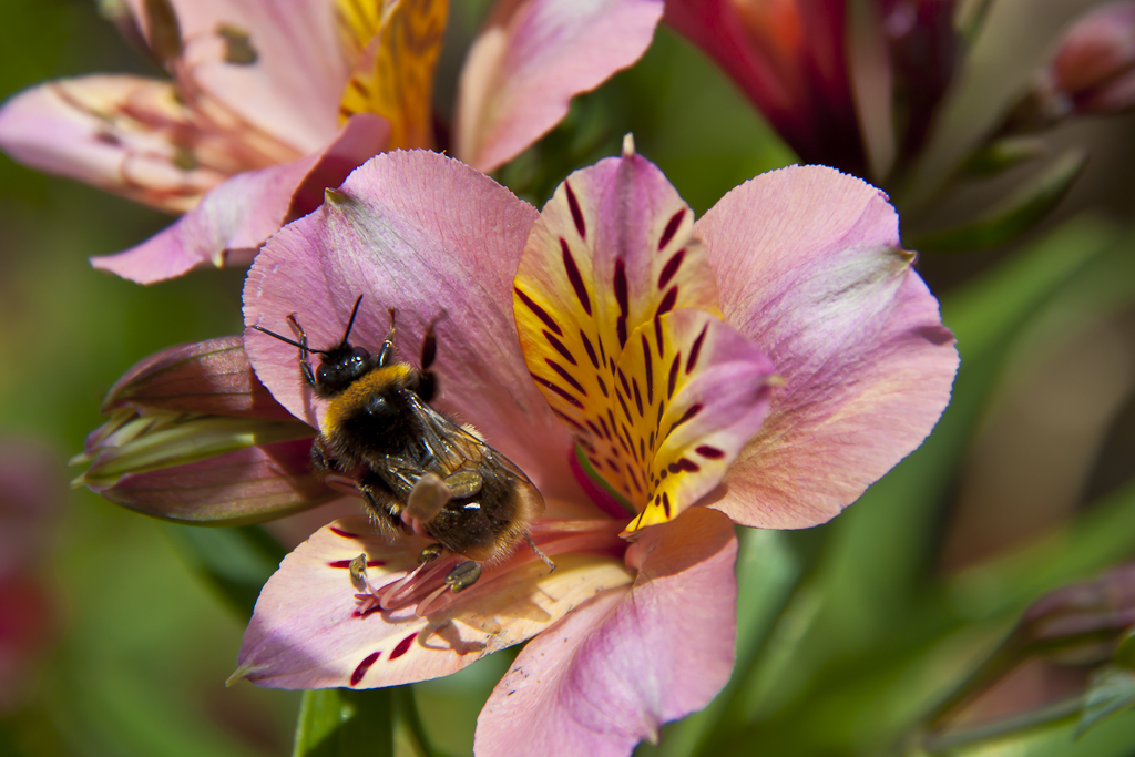 Bees_2011_17654