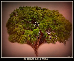 rbol de la Vida / Tree of the life (Arice39) Tags: flickr explore treebranches rbolramas trunkrootslifenaturetexture troncoracesvidanaturalezatexturafotofrafaarice39