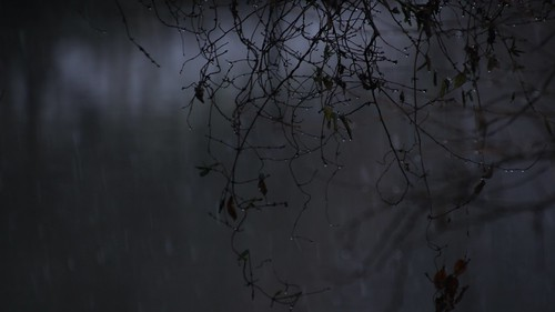 濡れた枝のシルエット