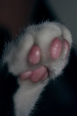 patinha do cook (kaleonel) Tags: karen gato gatinho pata leonel patinha kaleonel