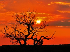 Silhouette tree and the sunset (JC Patricio Photography) Tags: sunset pordosol brazil tree sol sundown dusk jc cerrado savannah fotografia rvore matogrosso photograpy topshots patrcio abigfave natureselegantshots panoramafotografico jcpatricio thebestofmimamorsgroups tripleniceshot theoriginalgoldseal mygearandme mygearandmepremium mygearandmebronze mygearandmesilver mygearandmegold mygearandmeplatinum mygearandmediamond ringexcellence dblringexcellence tplringexcellence