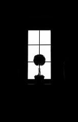 un árbol en la ventana (boriskombol) Tags: mono monochrome monotone monocromatico monocromo bnw blackandwhite blancoynegro bw biancoenero bn nb noiretblanc crnobijelo cb schwarzweis sw ventana window fenster fenêtre árbol tree baum arbre canon digital eos 6d ef70200l